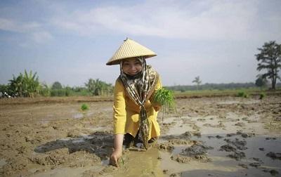 Calon Bupati Lamteng Nessy Mustafa Lakukan Penanaman Padi Bersama Para Petani