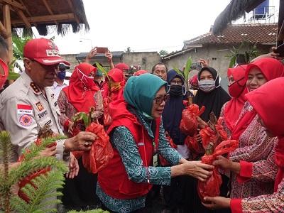 Bupati Lampung Tengah Ikuti Acara Tanam Perdana Pisang Mas Kirana Kalirejo